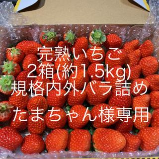 たまちゃん様専用●完熟いちご1.5kg●クール便(フルーツ)