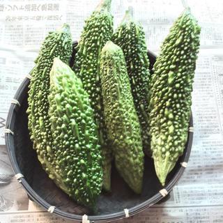 宮古島産ゴーヤー(6本)(野菜)