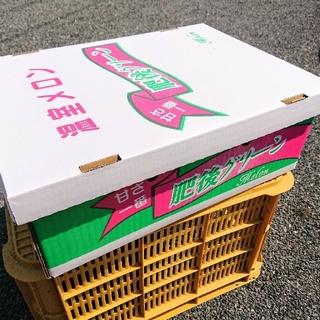即発送★熊本産肥後グリーンメロン秀L6玉(1玉約700g~程度)人気の高いメロン(フルーツ)