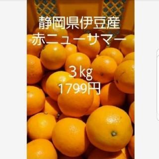 東伊豆産 ニューサマーオレンジ赤 3㎏(フルーツ)