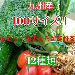 大人気✨九州産100サイズ新鮮春野菜12種類を箱いっぱい詰め合わせセット✨(野菜)