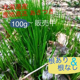 北海道産 あさつき《小ネギ》(野菜)