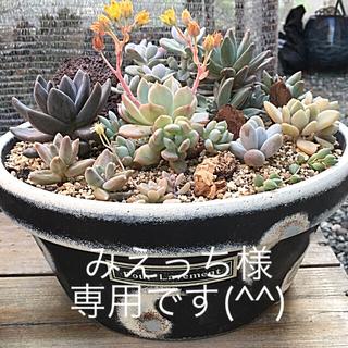多肉植物リメイク缶鉢寄せ植えにどうぞ(*´꒳`*)みえっち様専用てす(^^)(その他)