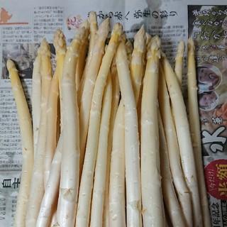 (4/20まで!)佐賀県産ホワイトアスパラ1.5キロ(訳あり(野菜)