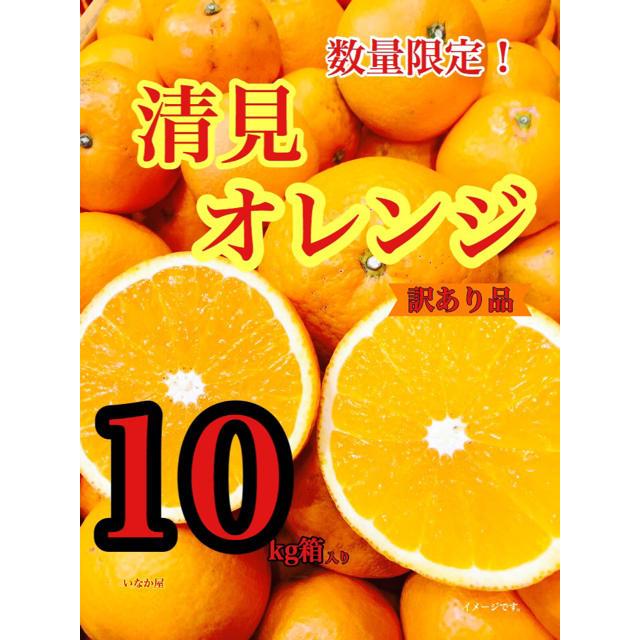清見オレンジ 訳あり品 本日までこの価格! 食品/飲料/酒の食品(フルーツ)の商品写真