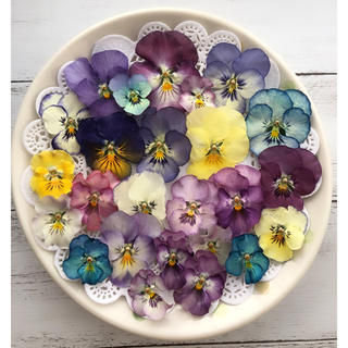 ドライフラワー 花材 ビオラと染めビオラ(各種パーツ)