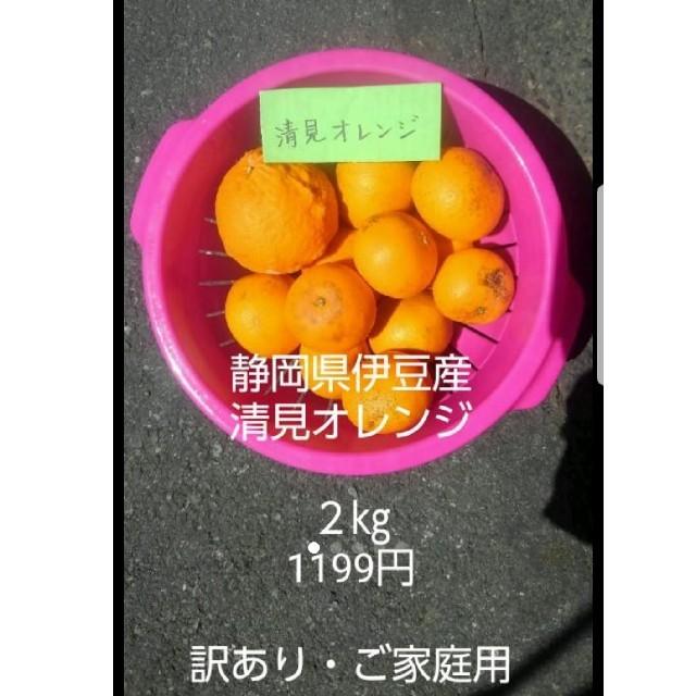 伊豆産 清見オレンジ 2㎏ 傷あり 食品/飲料/酒の食品(フルーツ)の商品写真
