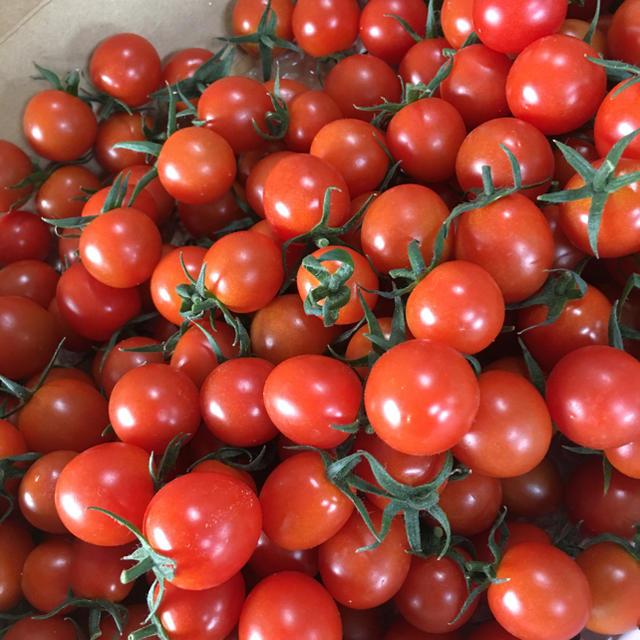 ミニトマト3kg 食品/飲料/酒の食品(野菜)の商品写真