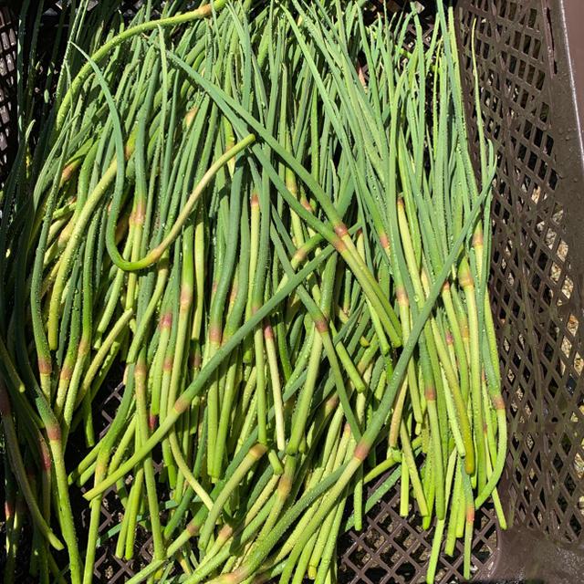 にんにくの芽 収穫次第発送致します。 送料込み 無農薬 食品/飲料/酒の食品(野菜)の商品写真