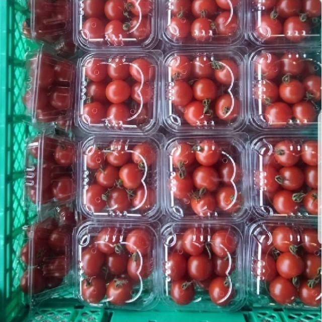 静岡県産 トマトセット 食品/飲料/酒の食品(野菜)の商品写真