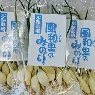 友芽にんにく【Jmm様専用】(野菜)