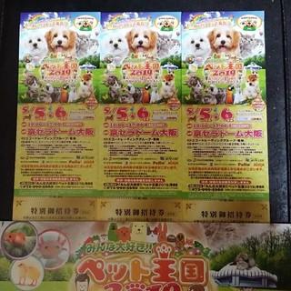 ペット王国 2019  特別御招待券 3枚(その他)