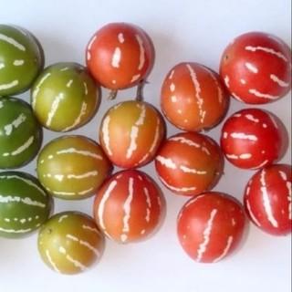 スズメウリの種 20粒(野菜)