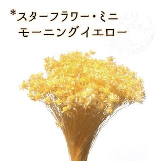 スターフラワー・ミニ モーニングイエロー 2g(ドライフラワー)