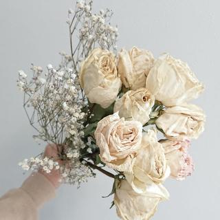 バラドライフラワー ホワイト かすみ草セット 【花材】(ドライフラワー)