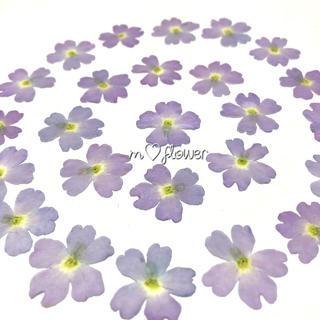 【天然無着色】薄紫のバーベナ*押し花素材(各種パーツ)