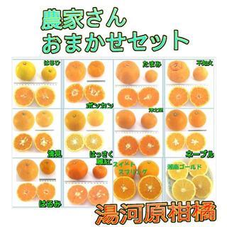 5㌔セット🍊かんきつ色々詰合わせ柑橘 ご家庭用 産地直送 数量限定(フルーツ)