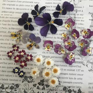 ドライフラワー ビオラ バーベナ 花かんざし(ドライフラワー)