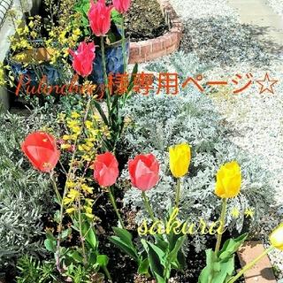 春へ~**ふんわりドライフラワーリース☆23センチ二つ(リース)