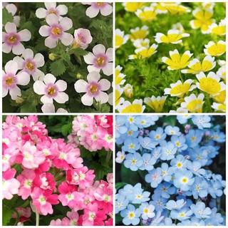 春~夏苗  小花 4種4苗 (宿根草含)イングリッシュガーデン LD428(その他)