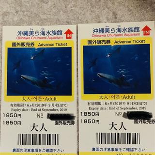 美ら海水族館 入場チケット2枚セット(水族館)