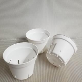 鉢 New‼️ ミニプラ鉢 ⏹️キュートなホワイト⏹️ 2号サイズ 20個(プランター)