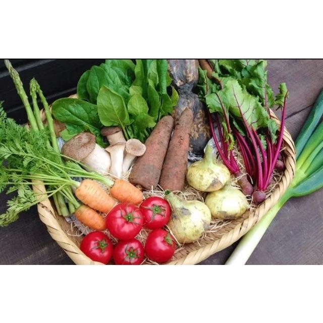 毎年大人気の無農薬 夏野菜 セット 食品/飲料/酒の食品(野菜)の商品写真