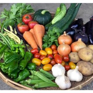 毎年大人気の無農薬 夏野菜 セット