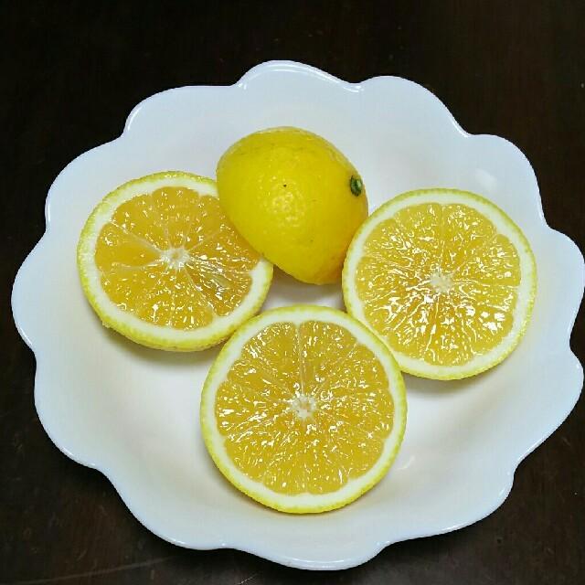 ニューサマーオレンジ 食品/飲料/酒の食品(フルーツ)の商品写真