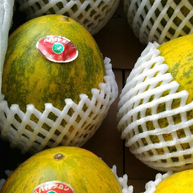 長崎パパイヤメロン赤秀6玉 食品/飲料/酒の食品(フルーツ)の商品写真