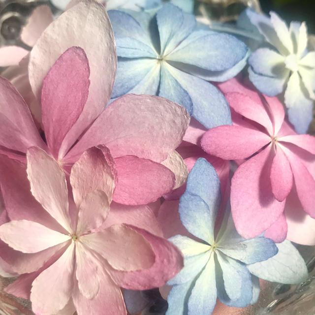 E53☆アジサイ ダンスパーティー【7輪】 花材ドライフラワー ハンドメイドのフラワー/ガーデン(ドライフラワー)の商品写真