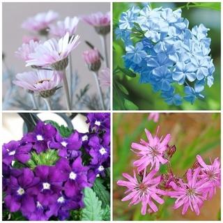春~夏苗  小花 4種4苗 (宿根草含)イングリッシュガーデン LD431(その他)
