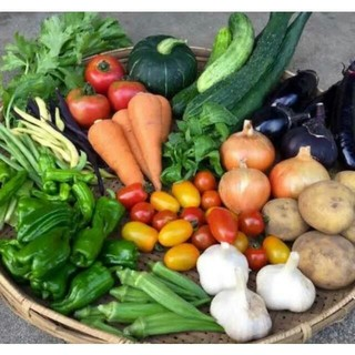 毎年大人気の無農薬 夏野菜 セット(野菜)