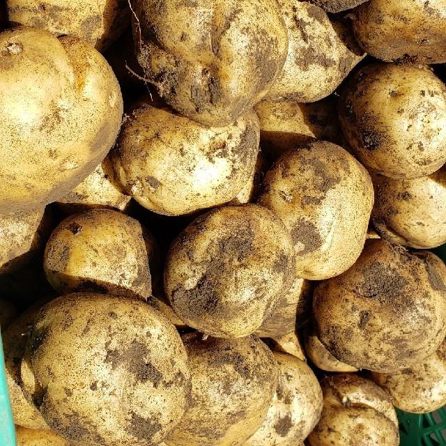 じゃがいも 男爵 約7キロ 食品/飲料/酒の食品(野菜)の商品写真