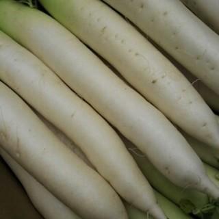 大山山麓無農薬無化学肥料栽培大根4本送料込(野菜)