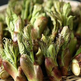 春の味覚☆旬の山菜 300g