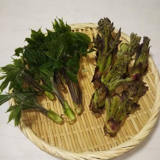 天然の山菜(たらの芽とこしあぶら)(野菜)