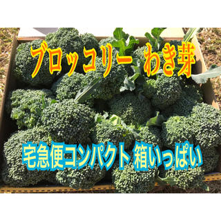 【野菜】 ブロッコリー わき芽 減農薬 おはよう  冷泉水 農家直送(野菜)