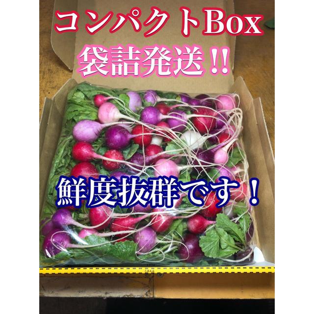 群馬県産ラディッシュ(ハツカダイコン)1kg。無農薬。 食品/飲料/酒の食品(野菜)の商品写真