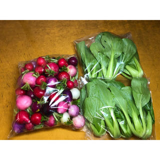 群馬県産ラディッシュ、チンゲンサイ。無農薬野菜。(野菜)