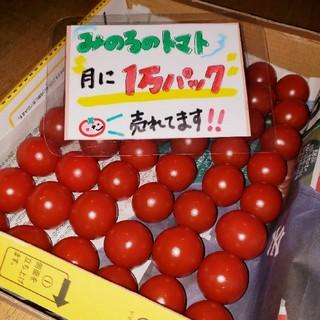 静岡県産 みのるのプチトマト