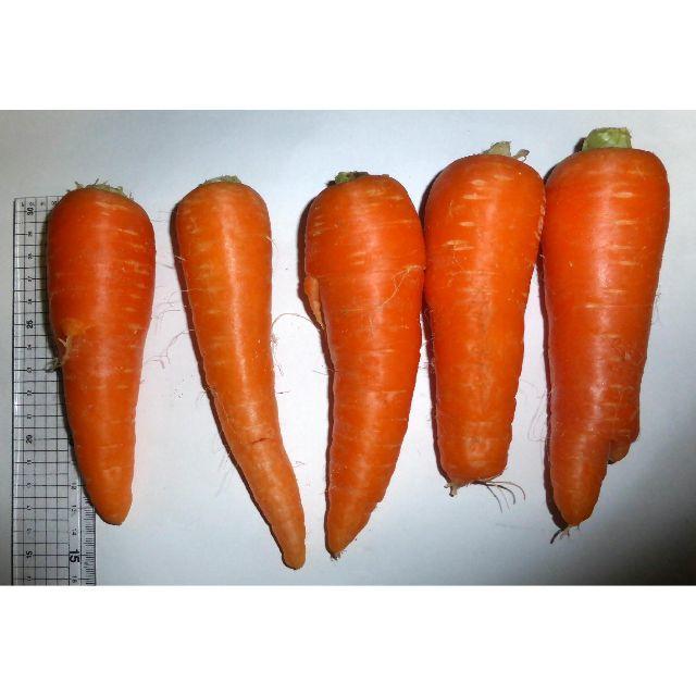 徳島産/ハウス栽培 人参 訳あり品(曲がり・軽微なシミ・角など)2kg以上 食品/飲料/酒の食品(野菜)の商品写真