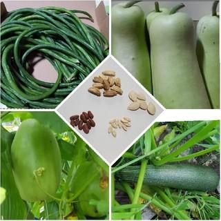 4種類の種(野菜)