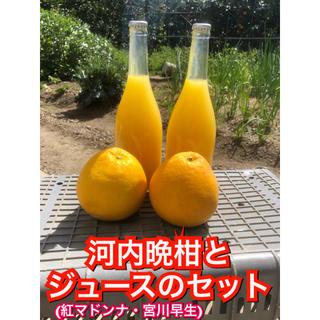 河内晩柑 愛媛県産 産地直送 紅マドンナジュース (フルーツ)