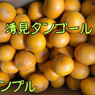 愛媛県産 ☆清見タンゴール☆農家直送便 家庭用 約5kg(フルーツ)