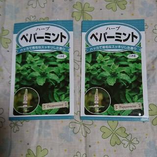 ペパーミントの種2袋セット(野菜)