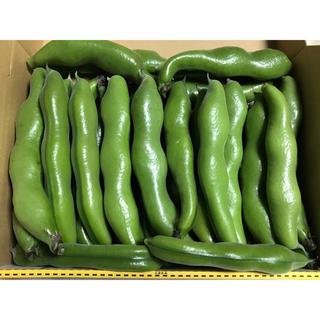 そら豆 空豆 徳島産 1kg 送料込(野菜)