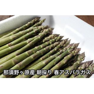 【PAC948様専用】那須野が原産 朝採りアスパラ 1.5kg サイズミックス(野菜)