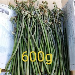 わらび 山菜 600g(野菜)