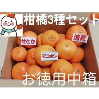 ③柑橘Se tお徳中箱❗デコ&せとか&清見♥️雪だるまより(フルーツ)